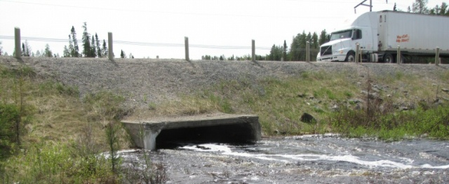 Magnet Creek culvert in full flood - June 5