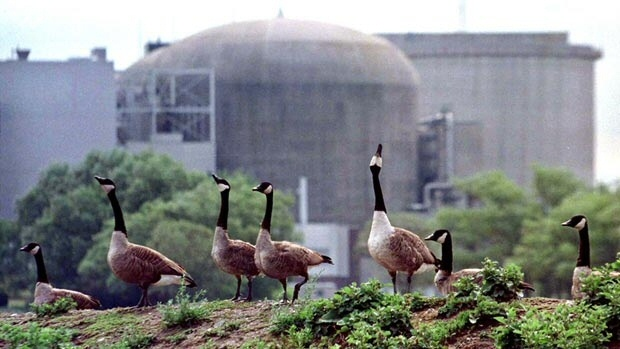 At the Pickering plant, Canada geese can live comfortably with the interim storage.  -Google image