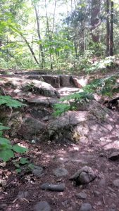 Rocks and ledges provide a natural stairway.