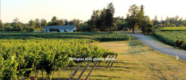 Georgian Hills Vineyard. Company image.