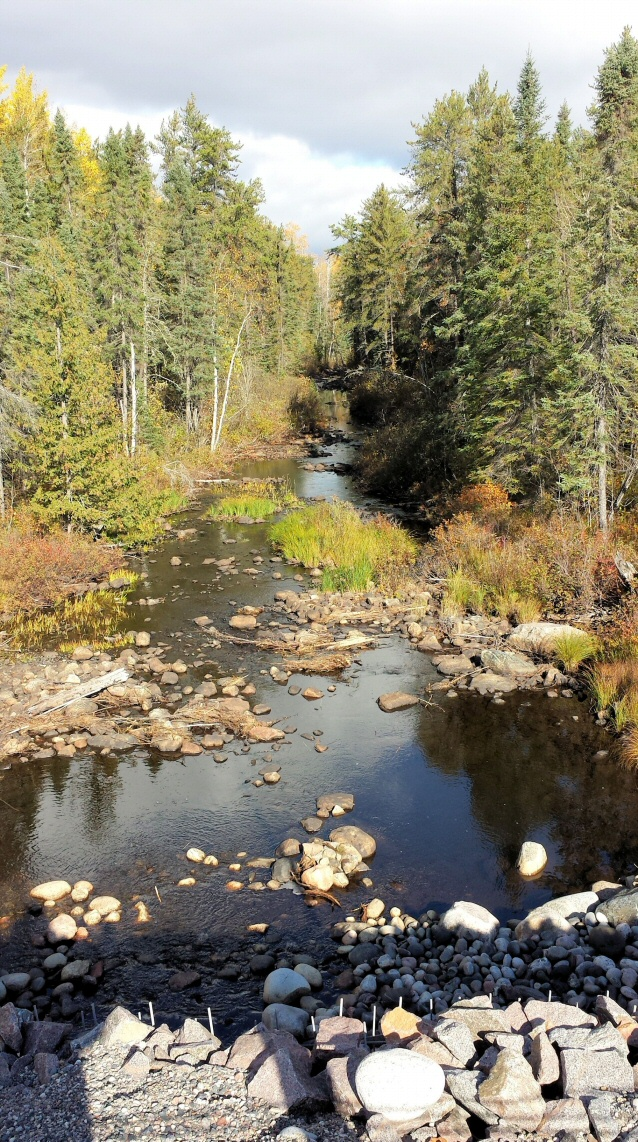 Creelman Creek in the fall, looking towards Wildgoose Lake . . .